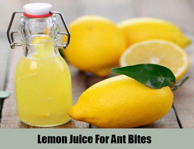 Lemon Juice For Ant Bites