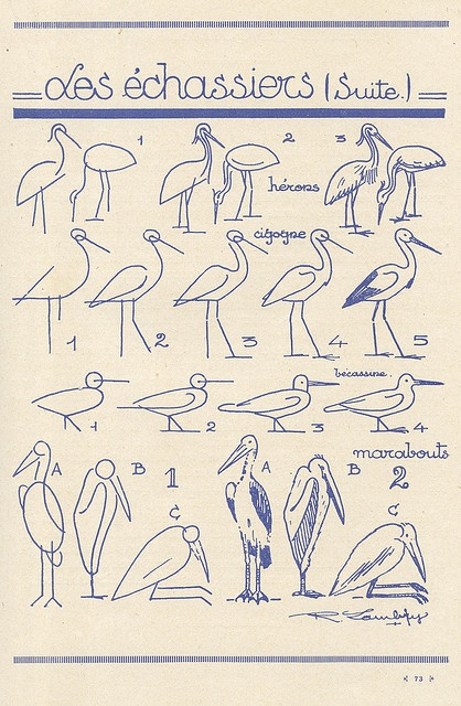 how to draw birds - french art tutorial