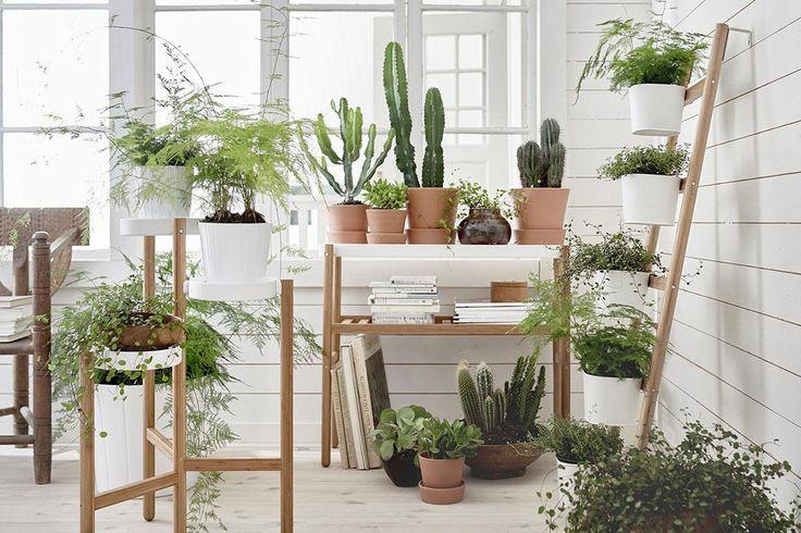 Die besten 17 ideen zu indoor pflanzenst nder auf for Zimmerpflanzen in szene setzen