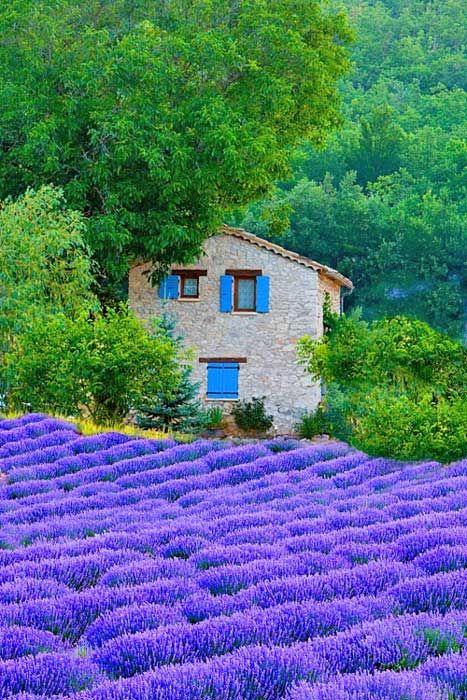 2272 besten lavendula lavendel lavender bilder auf pinterest lavendelfelder frankreich und. Black Bedroom Furniture Sets. Home Design Ideas