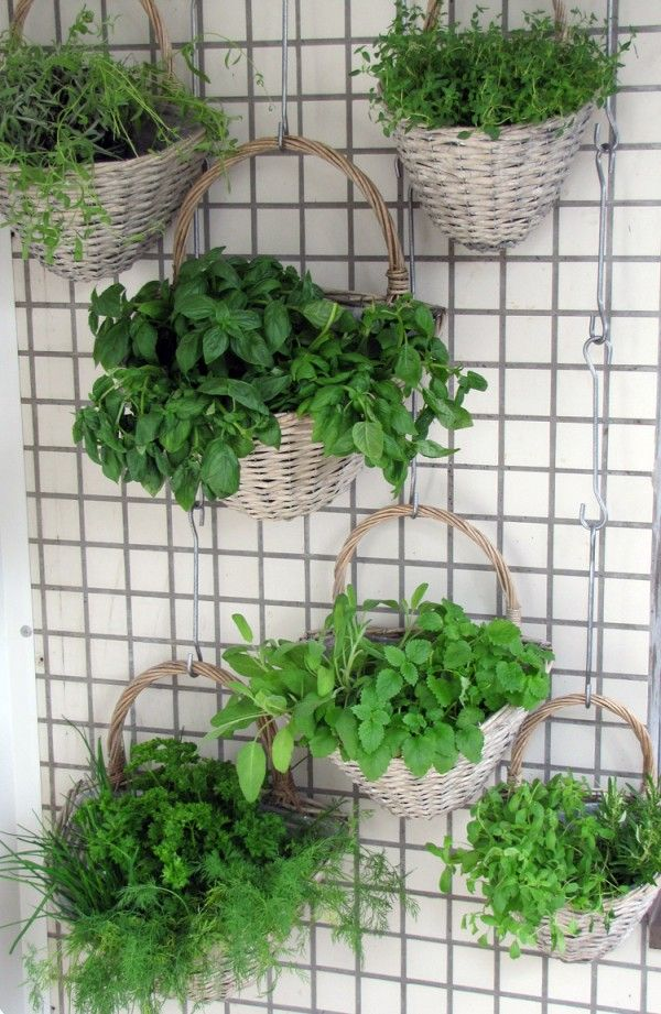 I could hang baskets of herbs from removable command adhesive hooks inn my rental, but then again the water will be a hassle with the wicker basket!