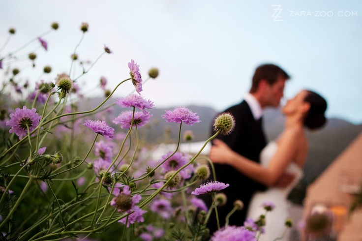 Stunning wedding shot by ZaraZoo in Franschhoek. http://www.zara-zoo.com/blog/dieu-donne-restaurant-wedding/