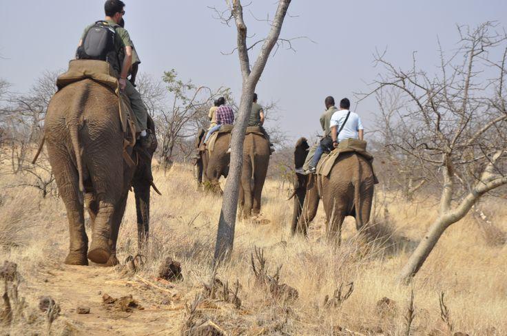 elefant trip - Wild life - Livingstone Zambia