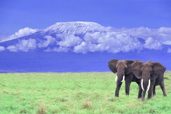 Der Kilimandscharo in Tansania - bei Bergsteigern beliebt und gefürchtet