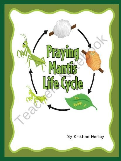Praying Mantis Life Cycle from Kristine's Classroom Creations on…