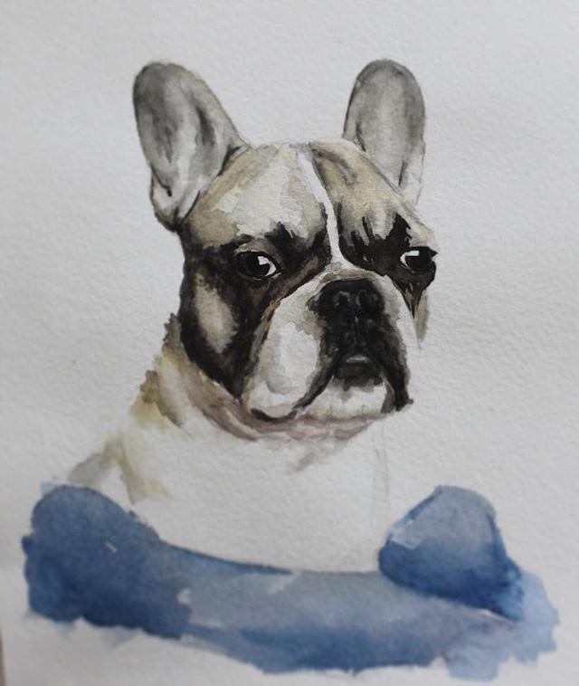 French bulldog sketch watercolors bullie illusration иллюстрация акварель бульдог