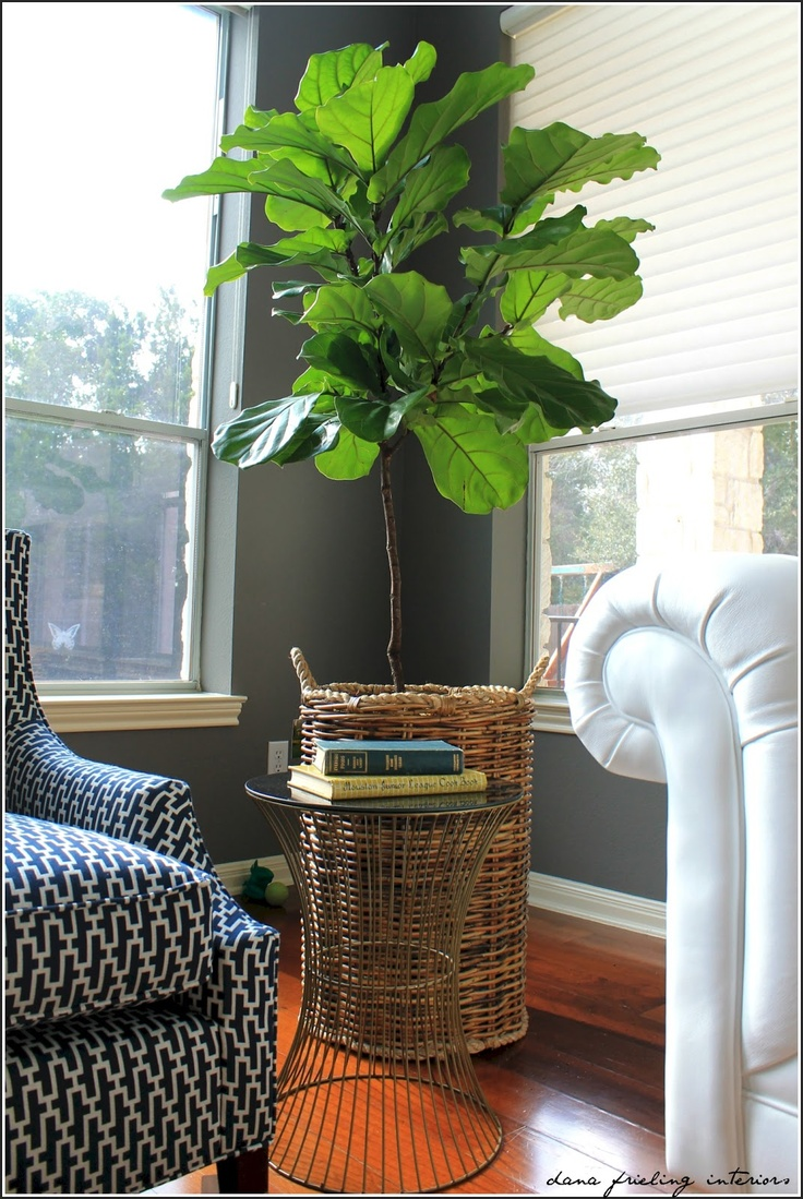 Make Them Wonder: Client Living Room Snippets