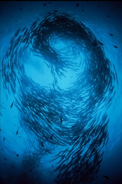 school of fish | Tumblr