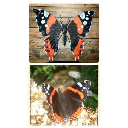 Atalanta vlinder  Www.creativeartbyjessica.nl