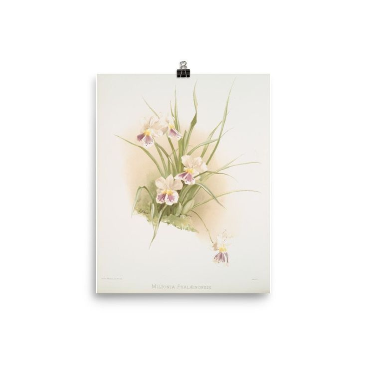 Botanical Orchid Print by Joseph Mansell is so pretty in a powder room. www.sarahpiersonhome.com