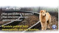 Ayudamos a localizar perros perdidos    Trabajamos activamente para que ningún perro se quede sin hogar. ¿Has perdido a tu perro? ¿Has encontrado un perro perdido? En http://arteroacademy.com/ tienes un servicio totalmente gratuito para ayudar a encontrarlos.     Muchos veterinarios y peluquerías caninas consultan nuestra web para ayudar a los perros que se han perdido. Es un lugar de referencia para la ayuda a la mascota, para el feliz reencuentro con sus dueños.    #perrosperdidos