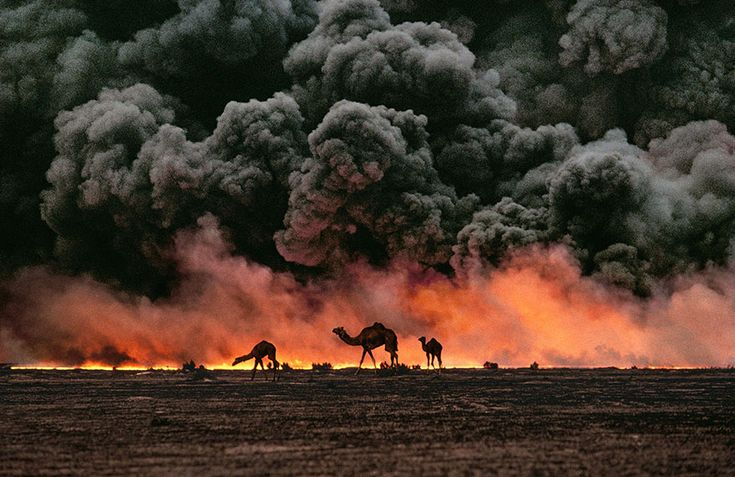 """Camel and oil fields, Kuwait, 1991 / Legendary photojournalist Steve McCurry, who counts the famous Afghan Girl portrait as only one of his many amazing photos, is opening a retrospective exhibit in Italy called """"Steve McCurry: Oltre Lo Sguardo"""" that will feature 150 photos taken throughout the 30 years of his illustrious career. The photos, taken among people of various cultures around the world, emphasize his unparalleled ability to capture the human soul through a lens."""