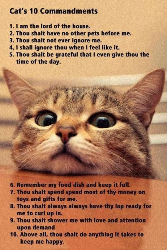 Best Cats Images On Pinterest Animal Animal Pictures And - Meatball the fat cat kept eating everyones food so his owners came up with a clever solution