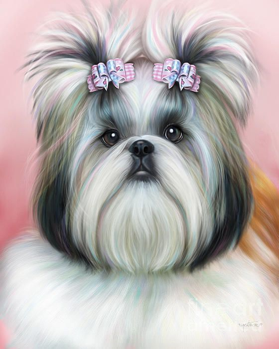 Yorkie 911 Rescue | Dog Breeds Picture Yorkshire Terrier 911