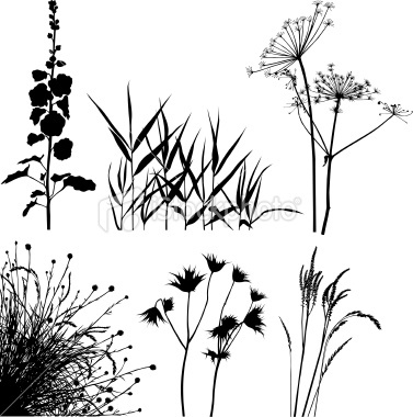 Meadow plants silhouettes Royalty Free Stock Vector Art Illustration