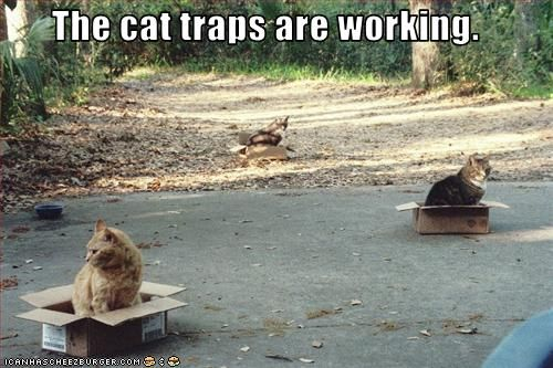 Cat traps. I laugh about this every time Dex or Jinx sit in a box like they are forced to! Hahahah!