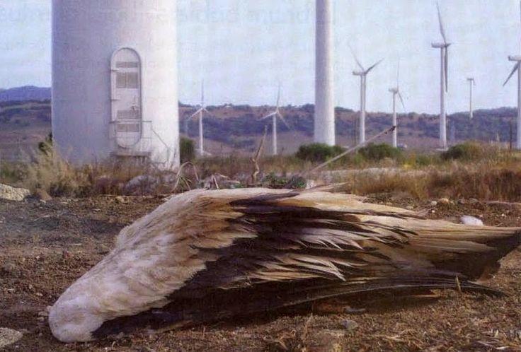 Impianti eolici: in quanto presidente degli Stati Uniti d'America, Obama è disposto in nome delle energie rinnovabili e pulite degli impianti eolici a sorvolare sulla morte delle Aquile reali, simbolo degli USA.  #ImpiantiEolici #EolicoSardegna