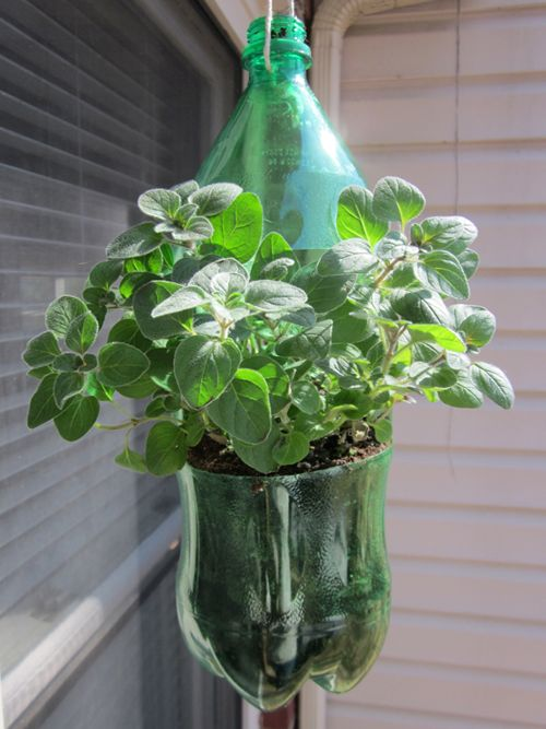 DIY Hanging Planters from old soda bottles by Scarlet Paolicchi on the Green Choices blog from SC Johnson.
