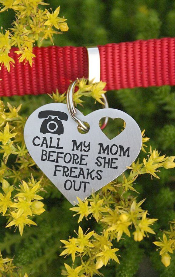 Pet Dogs For Sale In Kerala Google Dog Tags Pets Dog Love