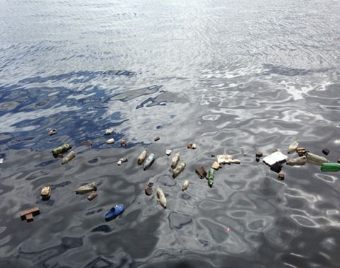 """Would You Like Micro-Plastic With Your Fish?  Plastics have become a pivotal part of modern life. The common material is used in packaging, construction, and electronic appliances and it is almost impossible for you to avoid its use on a daily basis. However, the way that we dispose of this plastic is far worse for the environment than many people could ever imagine.""  no plastic // zero waste // ecology // environmental impact // save our seas // clean up the ocean"