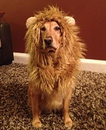 Lion Costume for Dogs :)