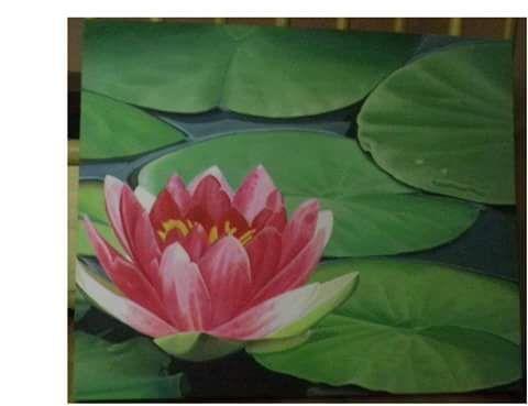 Fiore di Loto - Lotus Flower - olio su tela 40*50