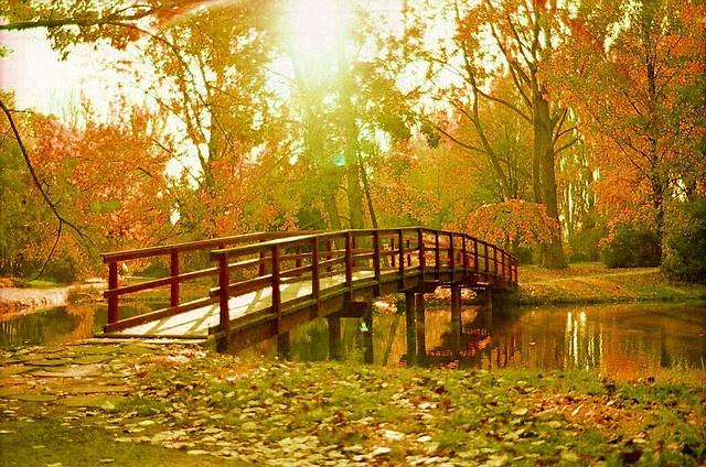 A forest bridge - Nitra SK - by Ferod', via Flickr
