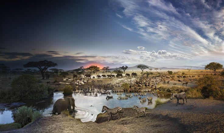 Serengeti National Park, Tanzania, Day to Night, 2015 - Serengeti National Park, Tanzania, Day to Night, 2015