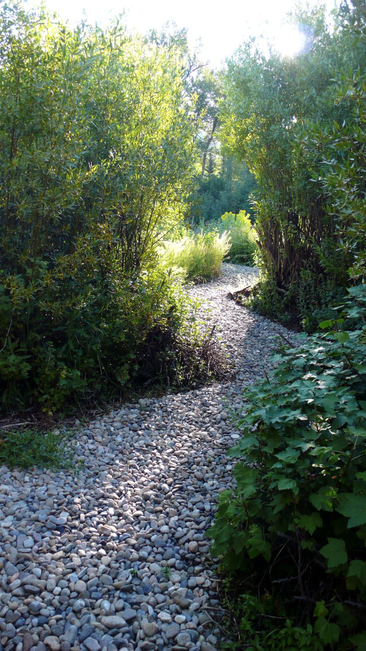 The path to the river's edge