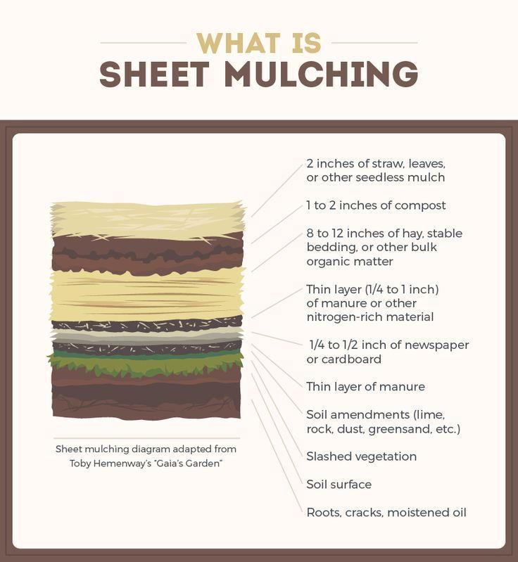 What is sheet mulching? The layers in lasagna gardening