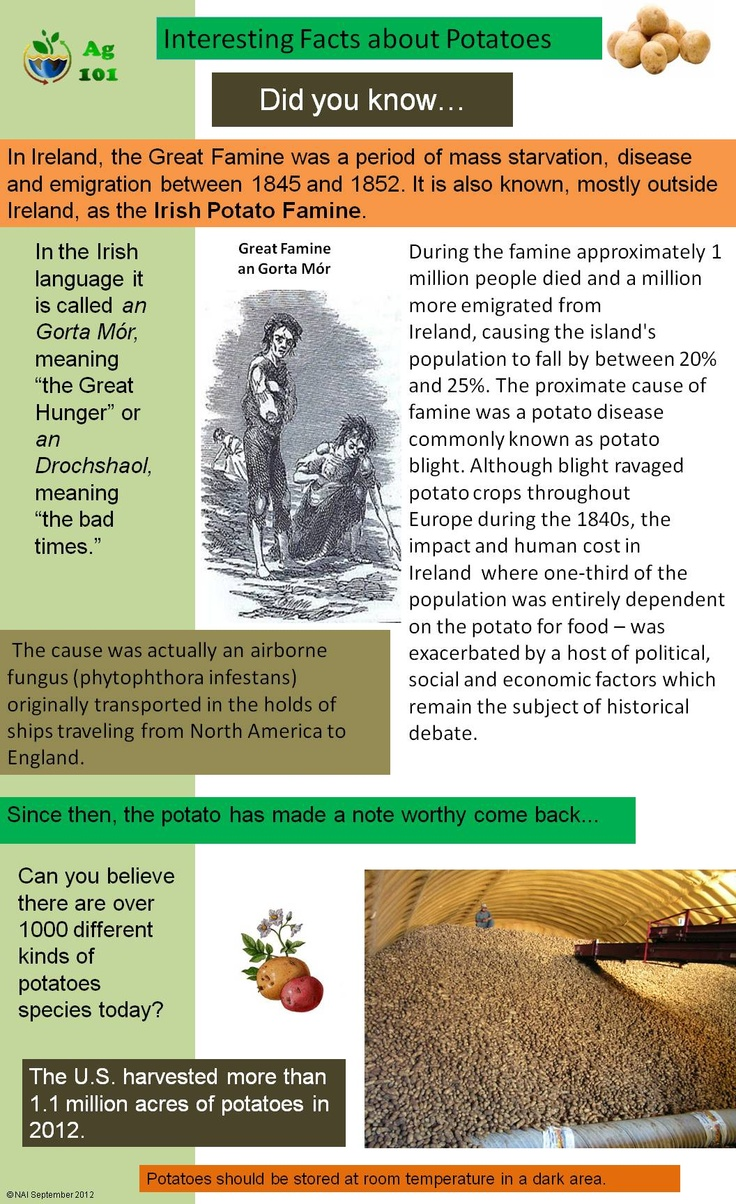 Irish Potato Famine