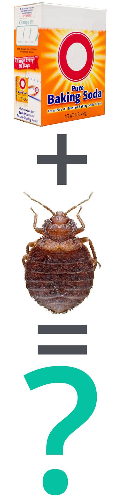 17 Best Images About Bed Bug Treatments On Pinterest