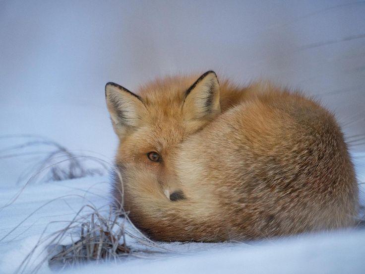 Tierwelt Kreuzworträtsel