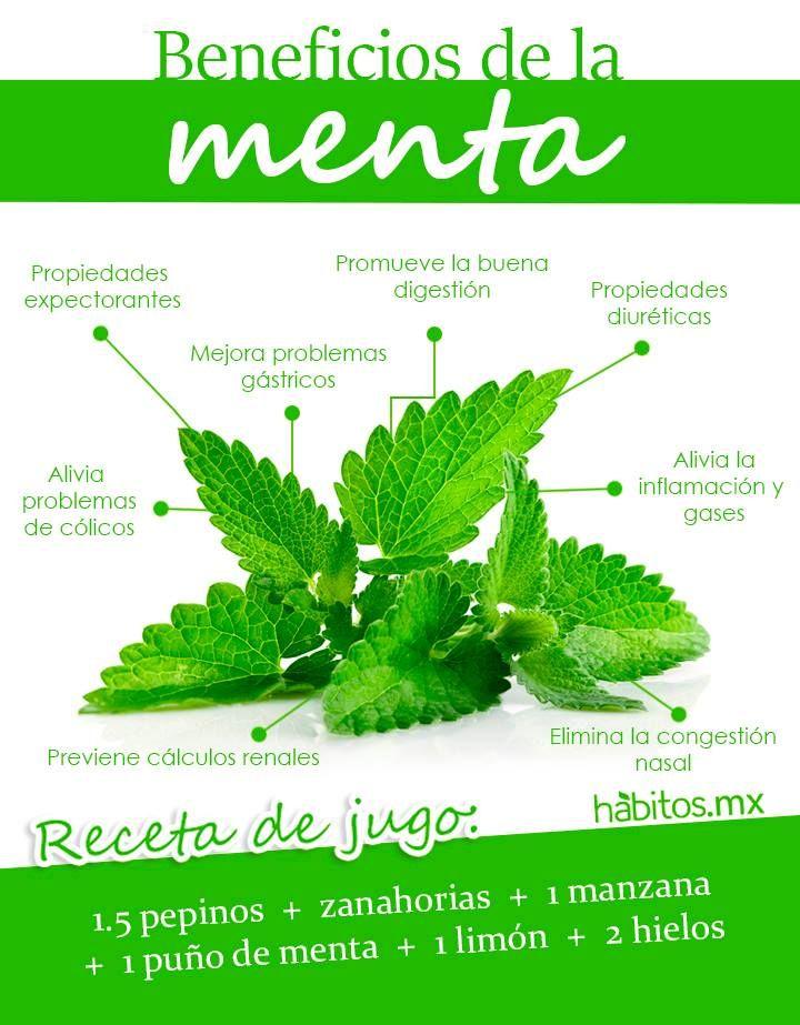 Los beneficios de la menta!!!!
