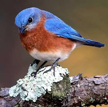 Best 25+ Small Birds Ideas On Pinterest | Pretty Birds Colorful Birds And Beautiful Birds
