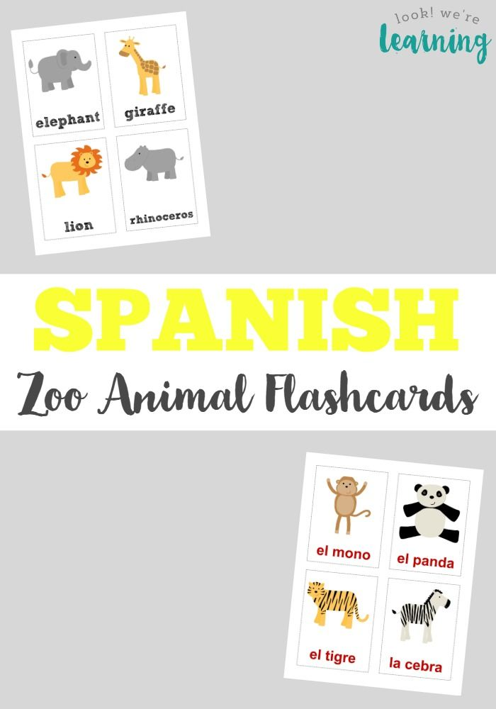 Spanish Words for Animals - Learn a Language