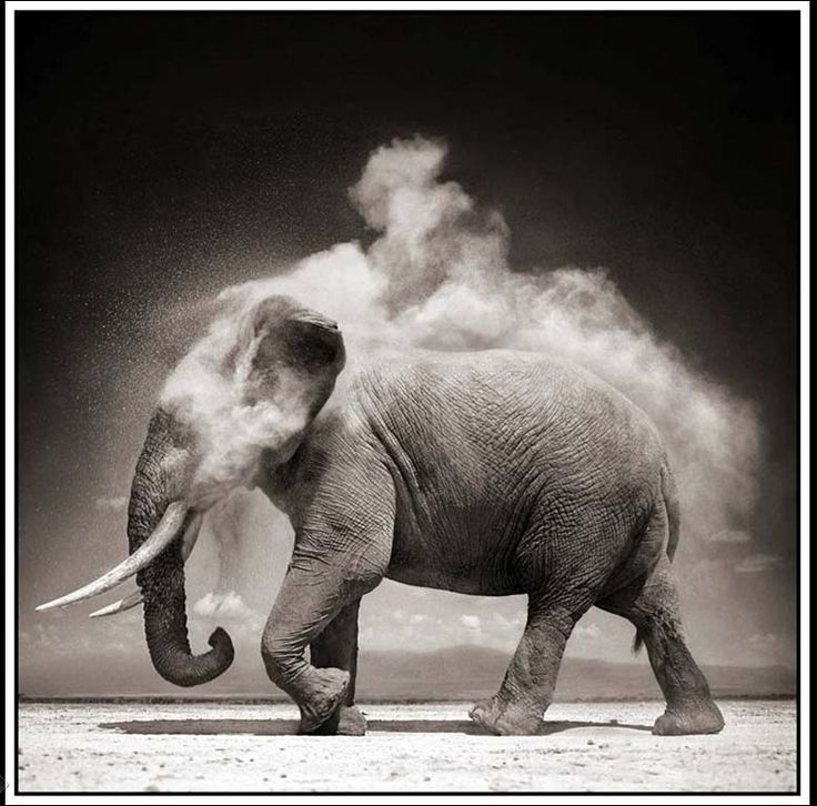 Elephant Photography Black And White, by Nick Brandt.