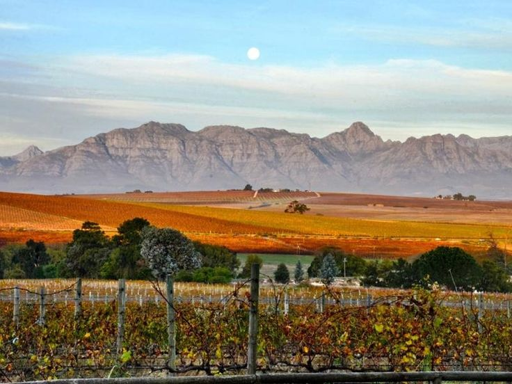 Wine Estate in Stellenbosch, South Africa #Vineyard