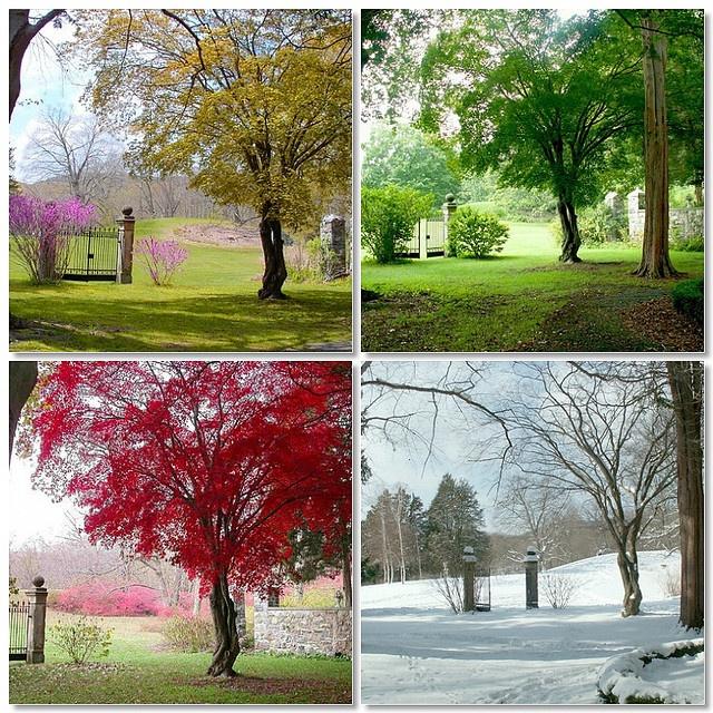 oooo pretty. Chinese Maple tree through the seasons