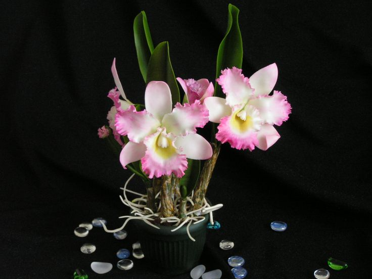 Моя орхидея каттлея из холодного фарфора