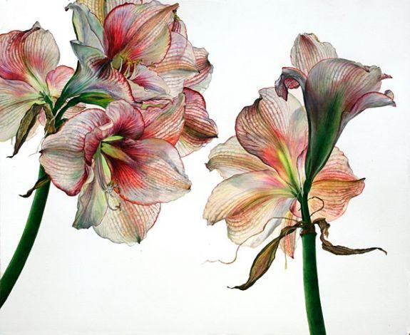 54 best images about amaryllis on pinterest for Amaryllis planter bulbe