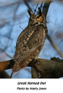 17 Best images about INDIANA NATIVE BIRDS on Pinterest | Spotted ...