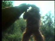 Night Of The Demon (1980) $19.99; The sickest, goriest Bigfoot movie of them all! Professor Nugent and his students embark on a journey to locate Bigfoot believed to be responsible for countless deaths. They disturb a Black Magic ritual and eventually uncover the truth about Bigfoot and his offspring, but who will believe them? In this outing the hairy beast actually rapes women, rips a biker's penis off while he urinates in the woods and rips another man in half!