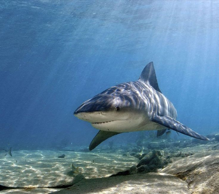 Under the Sea Water Animals | Shark,sea,ocean,marine,water,sea animal,sea animals,marine animal ...