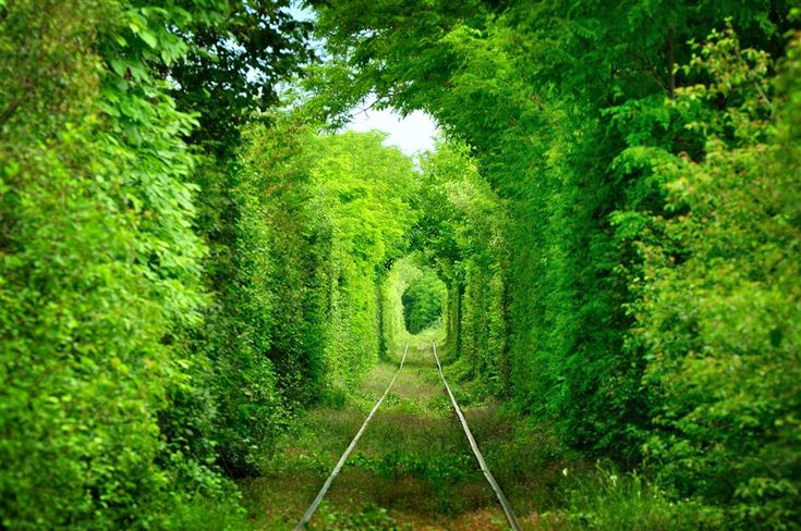 This gorgeous long, leafy tunnel can actually be found deep in the forests of Ukraine. Lo-cated near the town of Kleven, this tunnel provides passage for a private train and measures about 1.8 miles long.