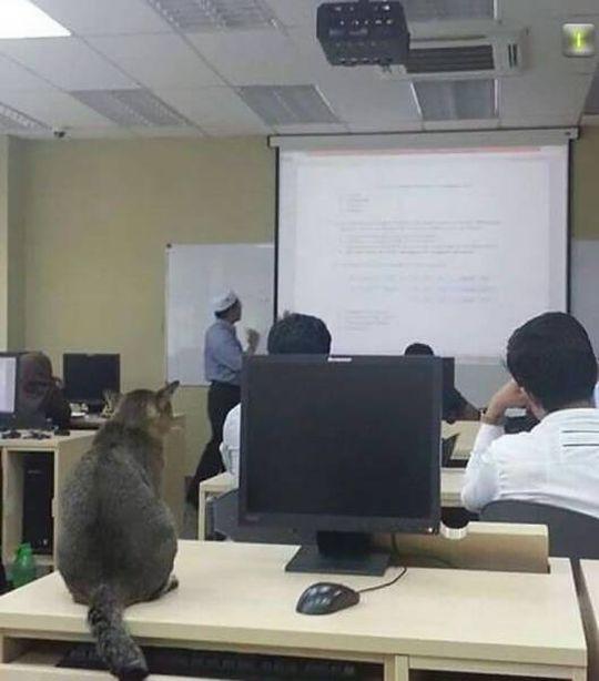 #интересное  Кот, который ходит на пары (3 фото)   В Малайзии в Международном исламском университете живет кот, который вместе со студентами исправно посещает пары. Животное ходит по аудиториям, где сидит вместе с учащимися, только вот терпения ему не всегда хват�