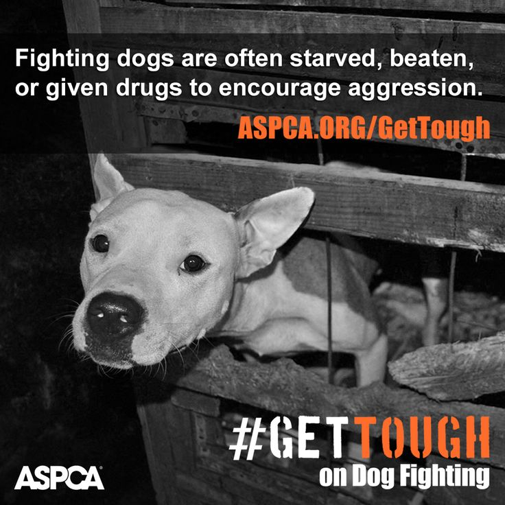 Help us #GetTough on dog fighting throughout the month of April. Find out how here: http://www.aspca.org/gettough.