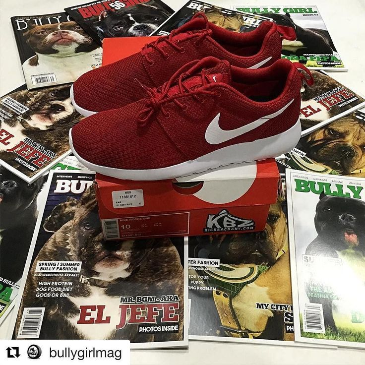 #Repost @bullygirlmag  A big shoutout to @kickbackz for hooking @bullygirlmag up with a pair of Nike Roshe One's. I appreciate it! Thanks! Follow and support @kickbackz  #fitness #fitlife #ilovebgm #americanbully #pitbull #abkc #bbcr #bulldog #frenchbulldog #mansbestfriend #dogs #skatelife #skateboarder #hiphop #music #bullybreed #exoticbully #bullylife #gottiline #razorsedge #bullyshows #cooldogs #lovebully #bigdogs #coolbreeds #dogrescue #bullygirlmagazine #mma