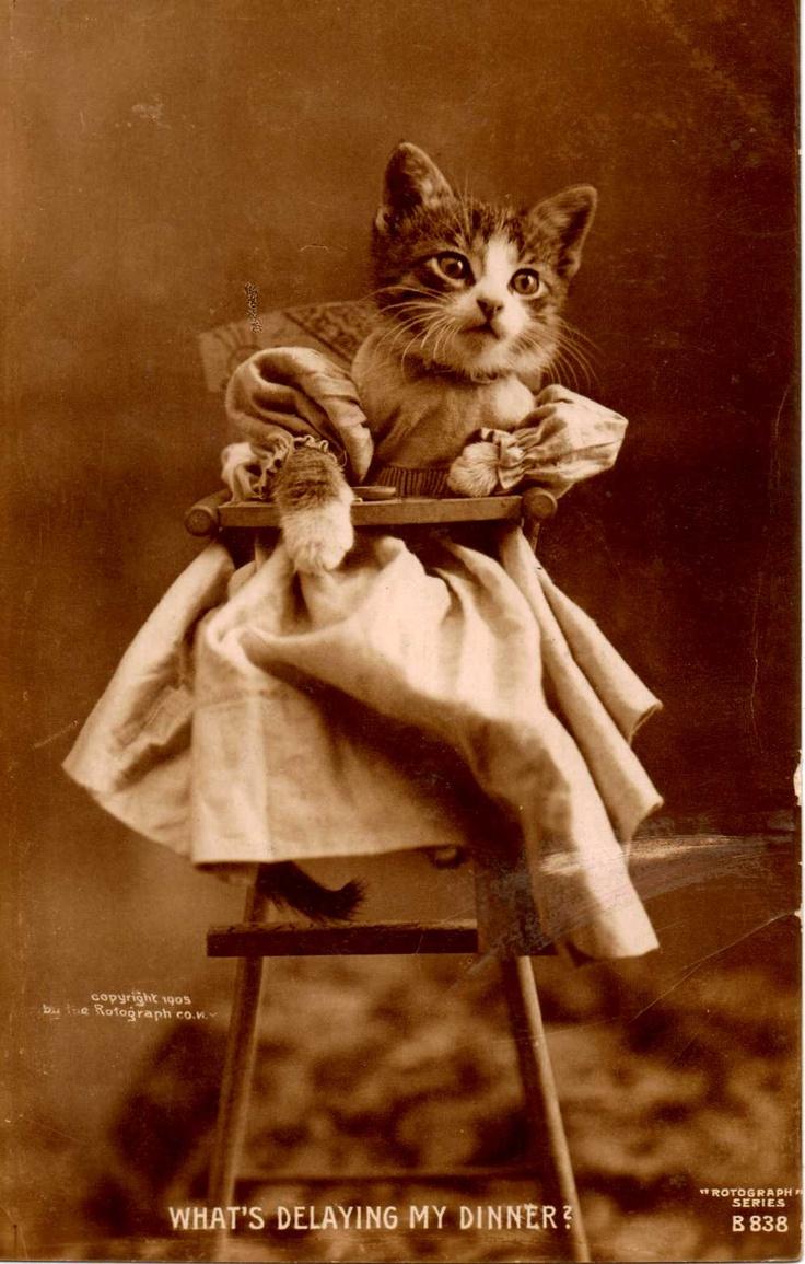 Vintage cat photo postcard(collection of L.Barr)