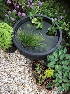 making a barrel pond, a pond in a barrel, aquatics, water garden